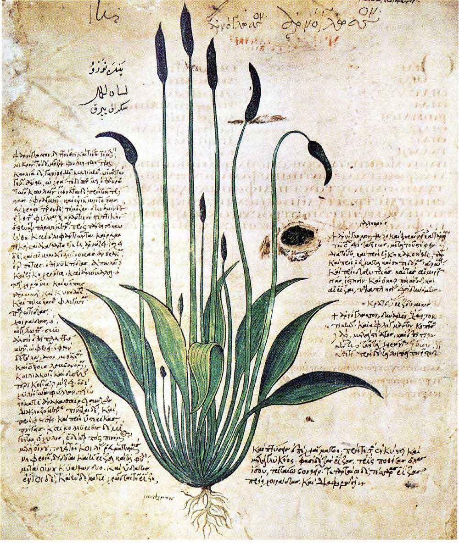 medicina botanica per dimagrire